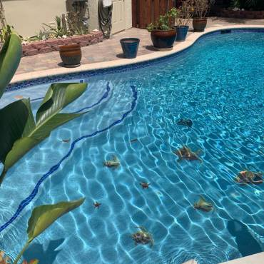 What Constitutes a Great Pool Care Company?